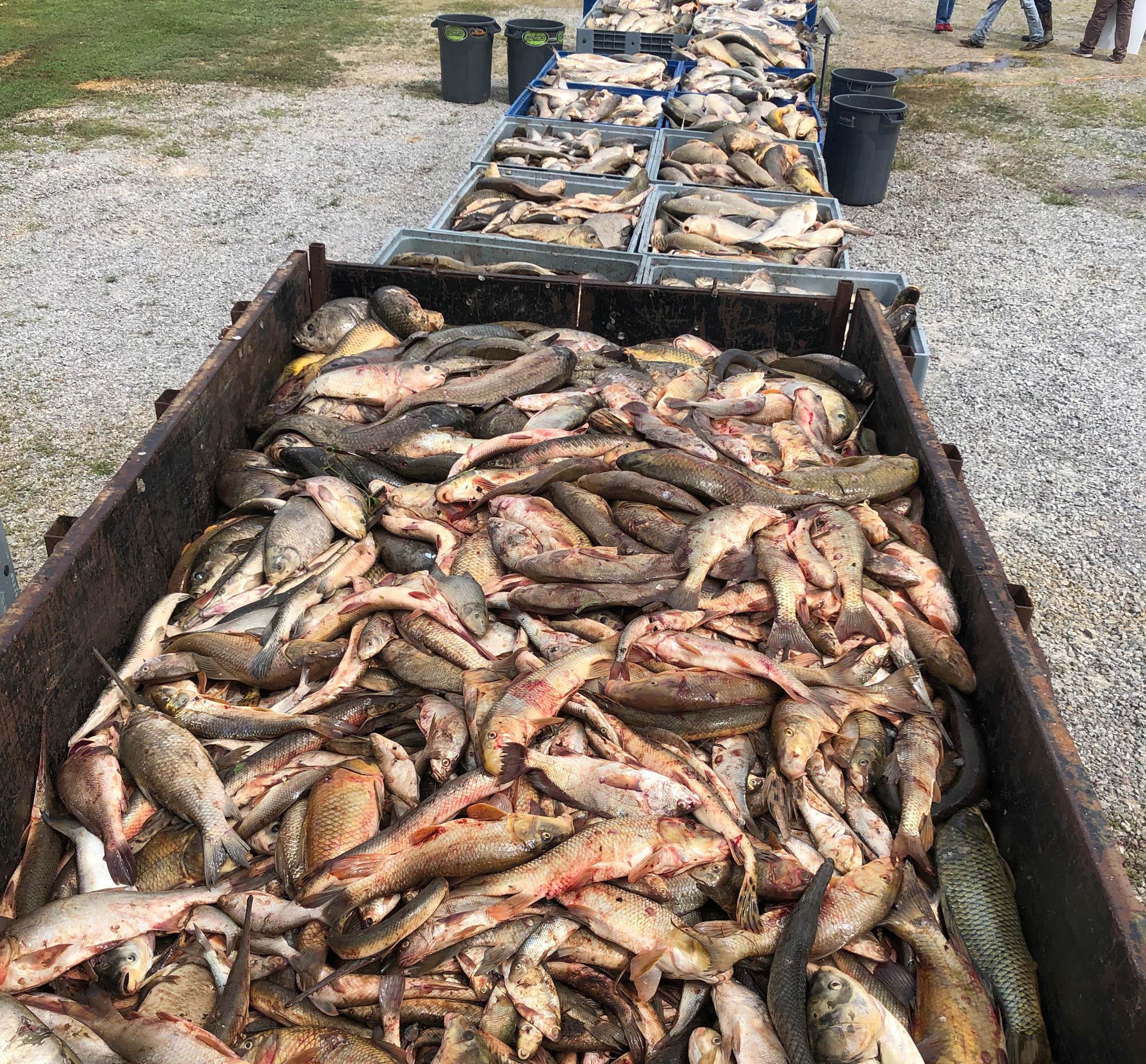 Fish Totes