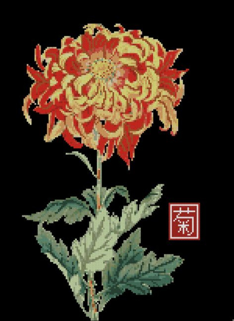 Japanese Chrysanthemum Orange