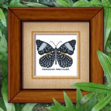 Butterfly Pattern 808