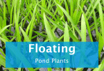 floating-pond-plants.png
