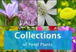 pond-plant-collections.png