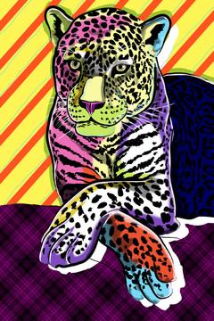 Cat Colors
