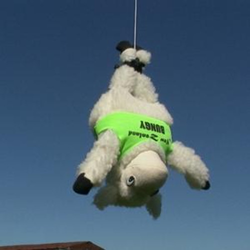 Bungy Jumping Sheep