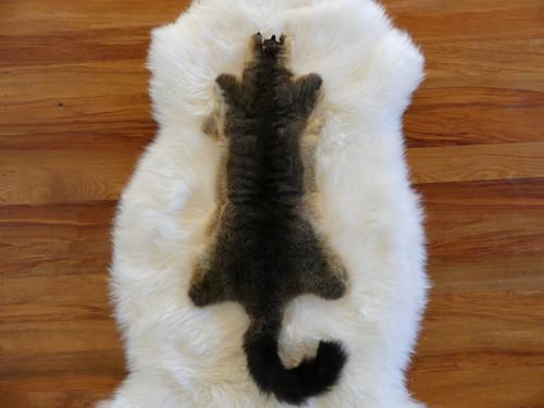 Single Possum Skin Pelt