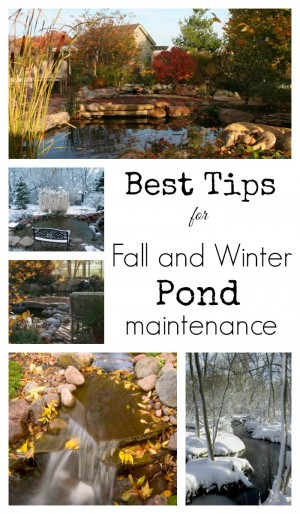 Best Tips for Fall and Winter Pond Maintenance