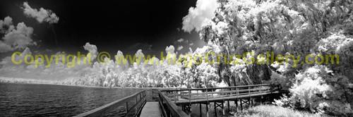 """Spirit Path"" ● Infrared Photography"