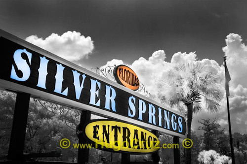 """""""Silver Springs"""" ● Infrared Photography"""