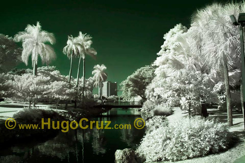 """""""Cane Tranquility"""" ● Infrared Photography"""