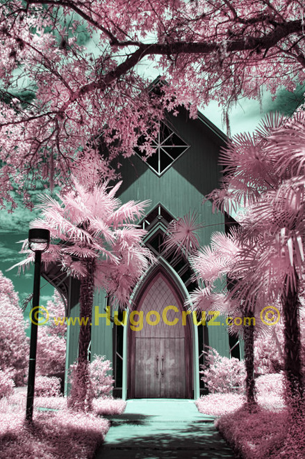 """Baughman Walk"" ● Infrared Photography"