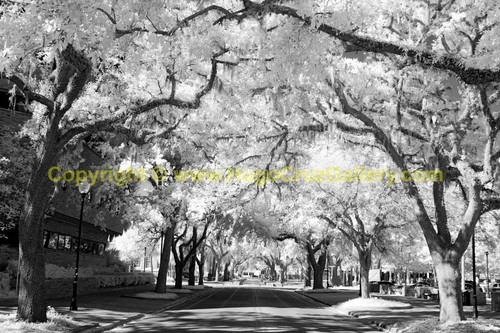 """""""The Walk"""" • Infrared Photography"""
