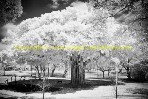 """Playground Guardian"" ● Infrared Photography"