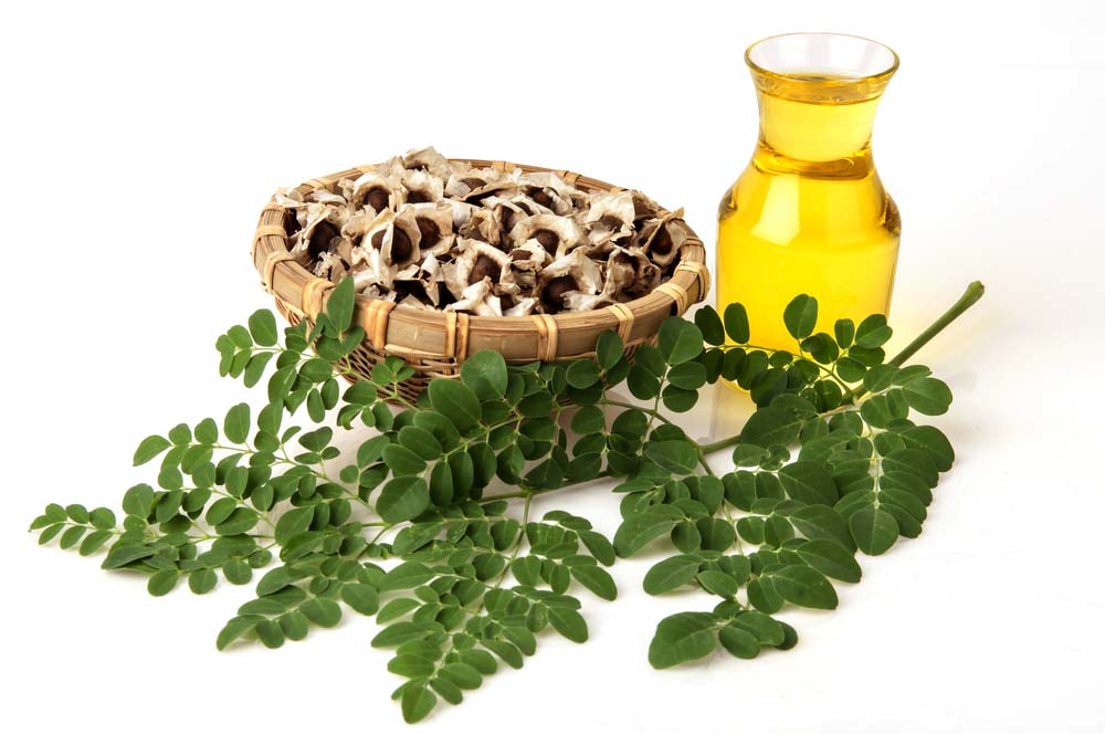 moringa-oil-leaf-seeds.jpg