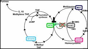 Master Methylation and Thrive!