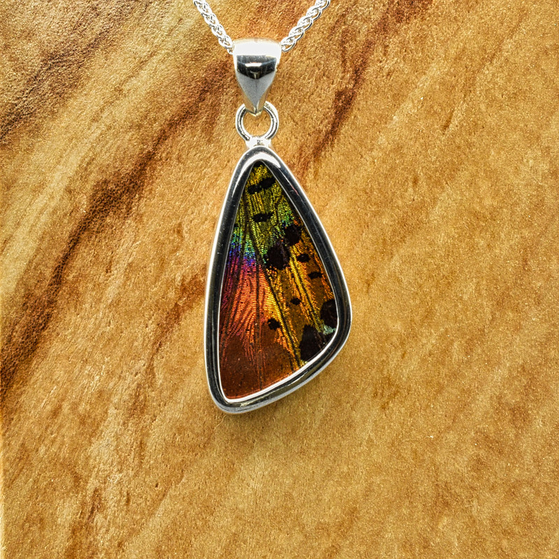 Small Madagascan Sunset Moth Sterling Bezel Pendant