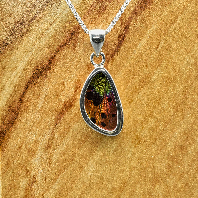 X-Small Madagascan Sunset Moth Sterling Bezel Pendant