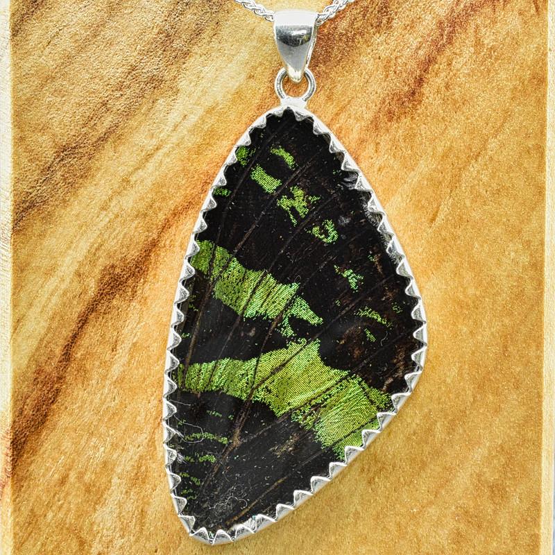 X-Large Madagascan Sunset Moth Sterling Bezel Pendant