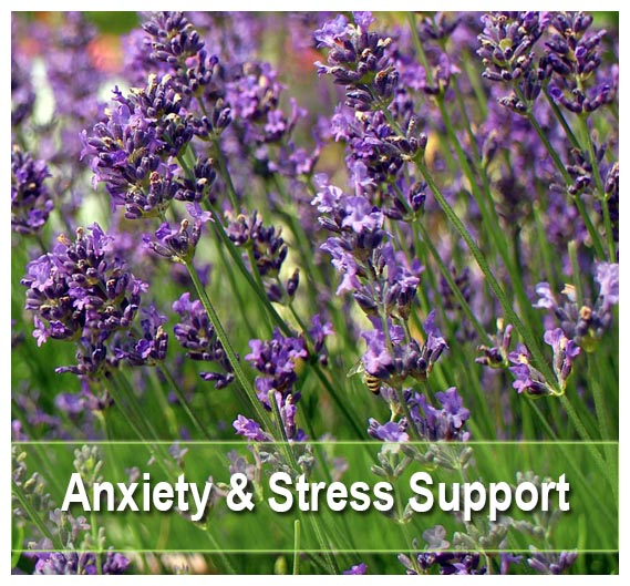 Buy Anxiety & Stress remedies on Health Palace