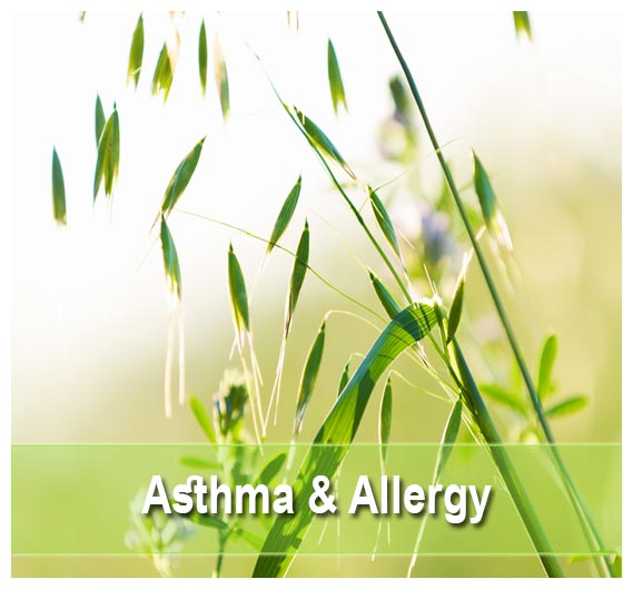 Buy Asthma & Allergy  remedies on Health Palace