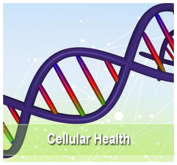 Buy Cellular Health supplements on Health Palace