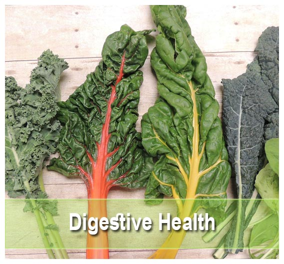 Find the best digestive supplements