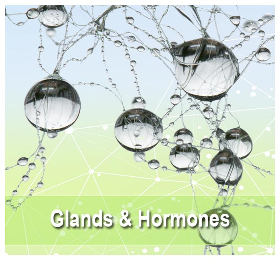 Find tGlands & Hormones on Health Palace