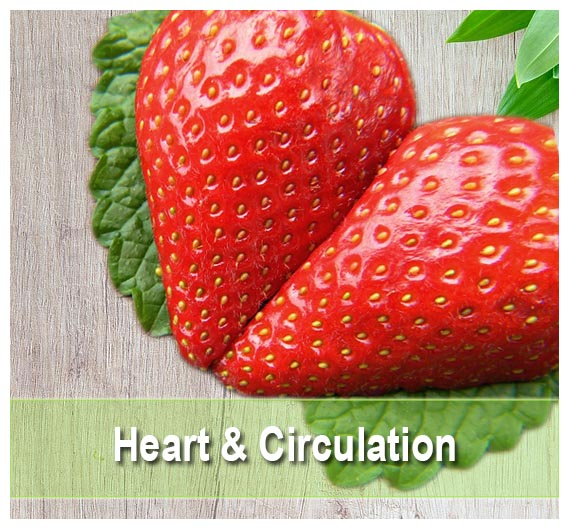 Heart & Circulation Supplements on Health Palace