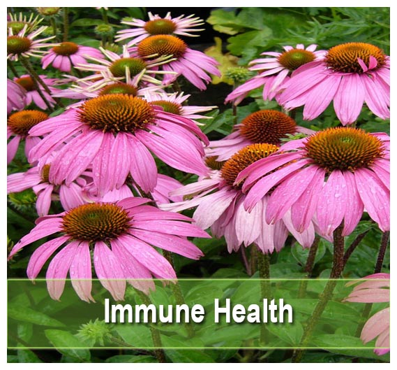 Find Supplements for Immune Health