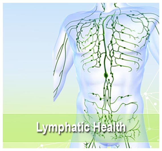 Lymphatic Health Supplements on Health Palace