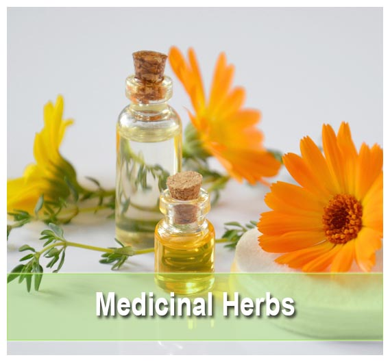 Find the best Medicinal Herbs on Health Palace