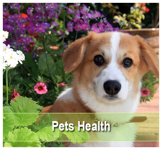 Pet's Health Supplements on Health Palace