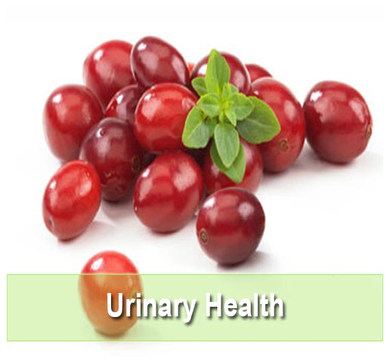 Find the best Urinary Health Supplements on Health Palace