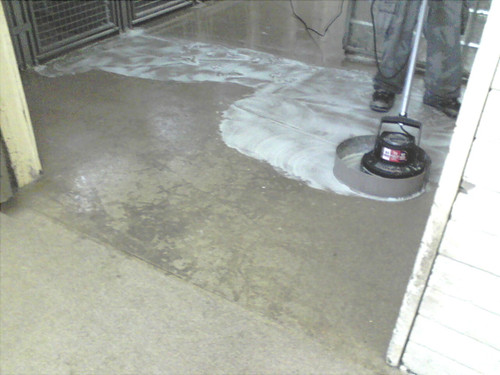 Scrubbing a Kennel floor using SealGreen Kennel cleaner
