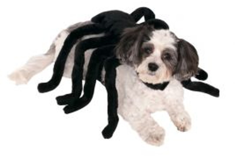 Spider Pet Costume