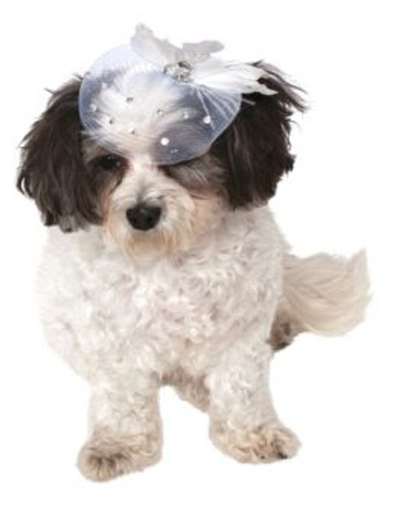 Formal Pet Hat