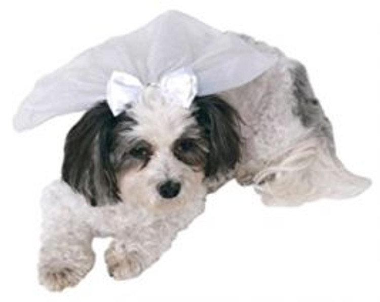 Wedding Veil Pets Hat