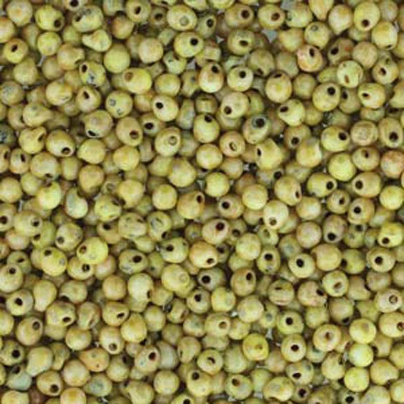 Canary Matte Picasso Miyuki 3.4mm Fringe Seed Bead Glass Drops 25 Gram