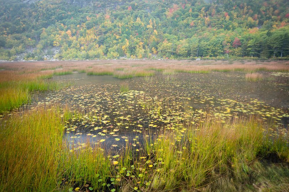 The Tarn, Acadia National Park
