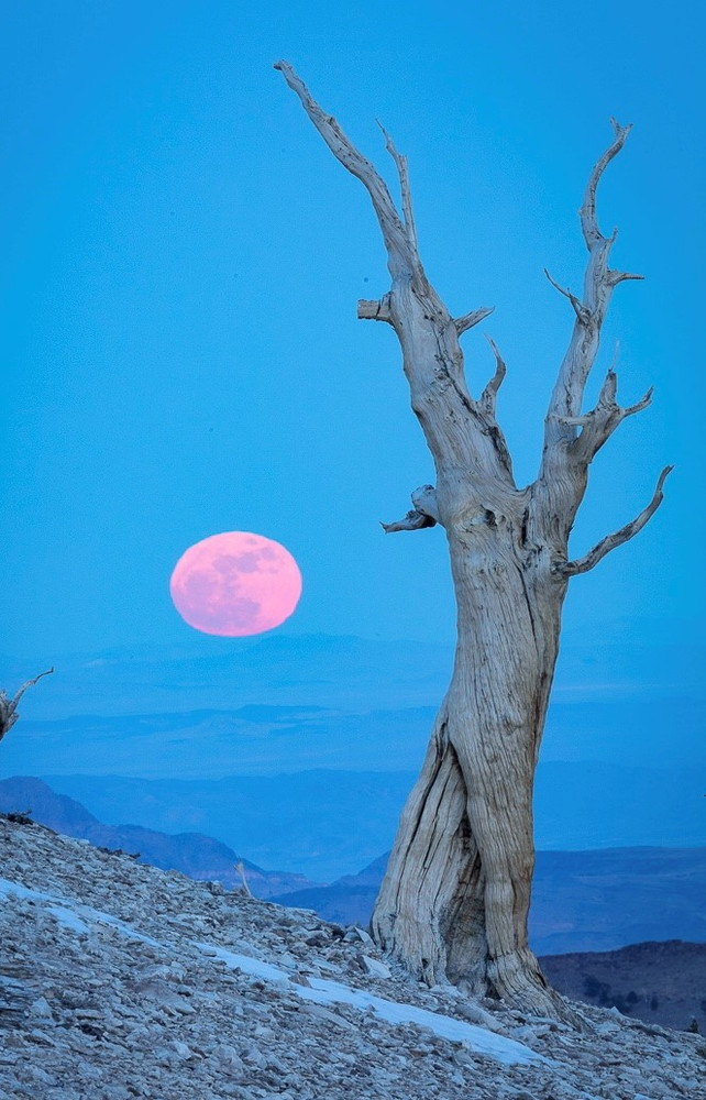 Super Moon, New Year's Day, the Patriarch Grove