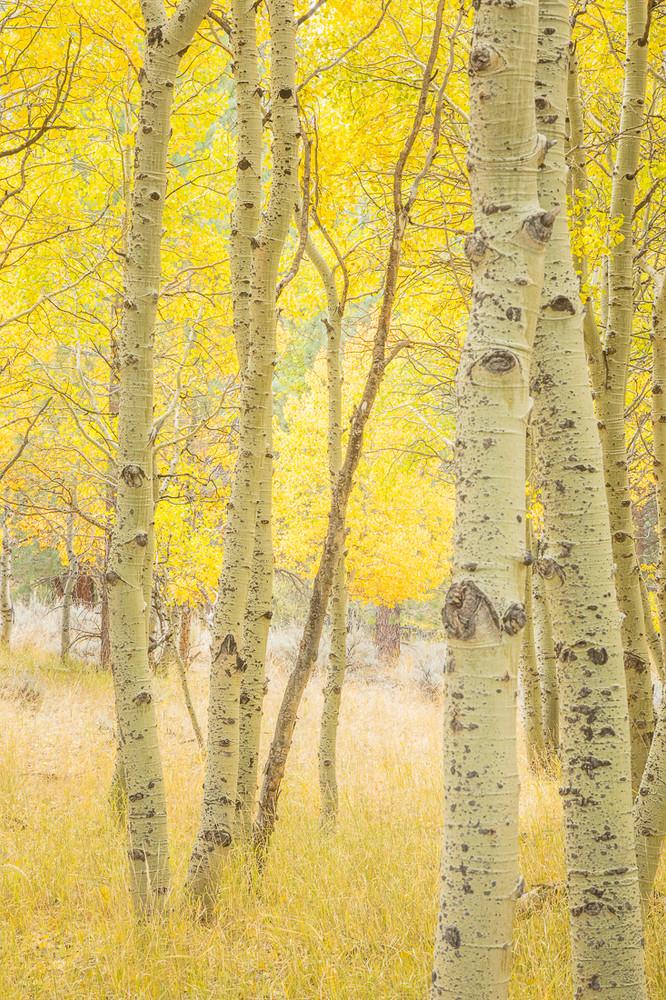 A Dreamy Fall Woods
