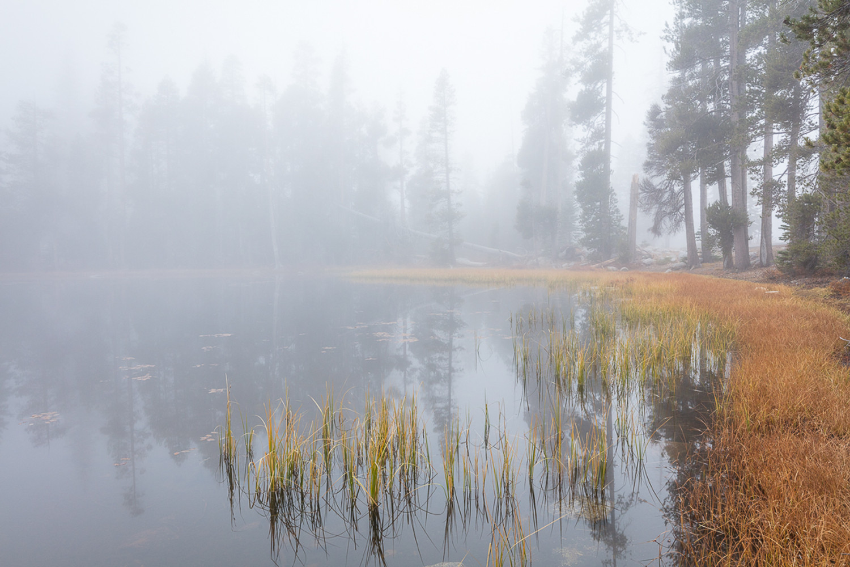 Foggy Afternoon, Autumn at Siesta Lake