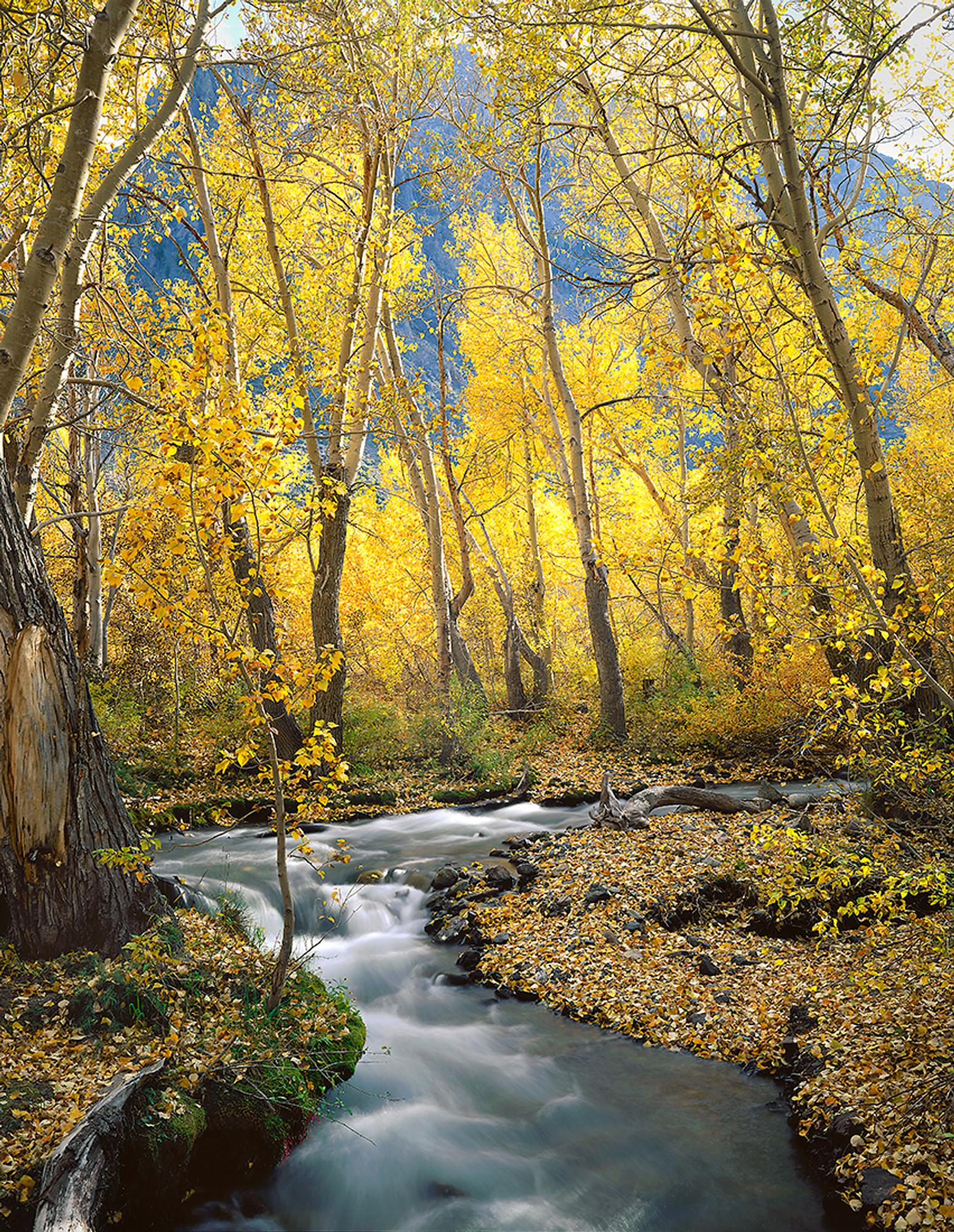 Autumn Along Mcgee Creek Vern Clevenger Photography