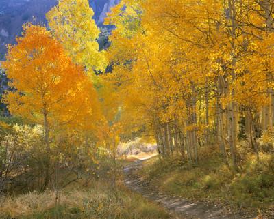 Bishop Creek Path