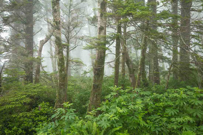 A Foggy Forest in Oregon