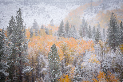 A Snowy Autumn Afternoon