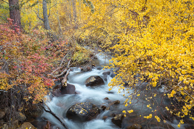 Late Autumn, the Canyons of the Sierra