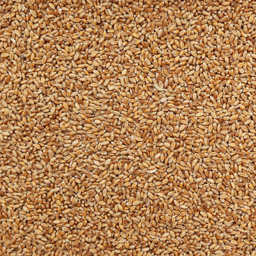 ORGANIC RED FIFE WHEAT, kernels