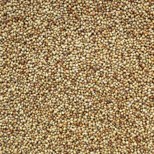 ORGANIC CORIANDER SEEDS, whole