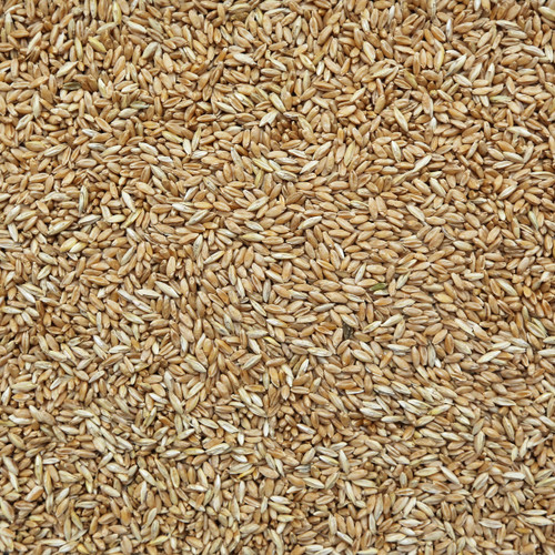 ORGANIC DURUM WHEAT, kernels