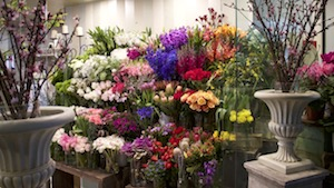 burns bay road florist lane cove