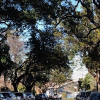 hunters-hill-tree-lined-street.jpg
